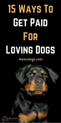 Find a way to turn your love for dogs into a plan for making money!