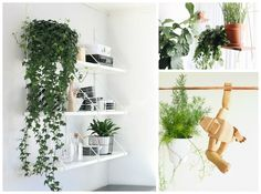 Add fresh new style to any room with these ten hanging plants that are very hard to kill, even for the add new life to any room in your home.