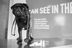 Pictures Of You, Pugs, Health Care, How To Become, Change, Group, Learning, Board, Animals
