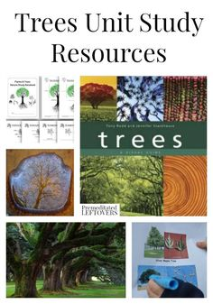 Tree Unit Study Resources, including educational tree videos, books about trees, tree identification projects, and other tree unit study ideas. Creative Curriculum Preschool, Montessori Science, Kindergarten Science, Preschool Projects, Forest School Activities, Nature Activities, Science Activities, All Nature, Nature Study