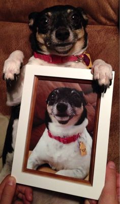 The 100 Most Important Dog Photos Of All Time