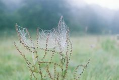 the dew sparkles like diamonds in the morning light by JEANINE CARON, via Flickr