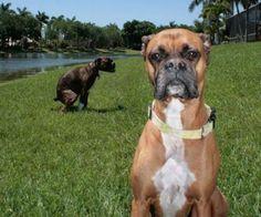 Animal photobombs...HILARIOUS!!!