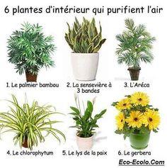 6 plantes d'intérieur qui assainissent l'air de votre maison.