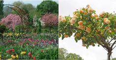 ¿Has visto alguna vez un árbol de rosas? ¿Te gustaría crear el tuyo?