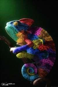 Colorful reptile