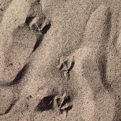 Sand // Footprints // Beach // Summer  Photo: Pala saaristoa Sand Footprint, Footprints, Nordic Home, Summer Photos, Island Life, Coastal Living, Scandinavian Design, Summer Beach, Instagram Posts