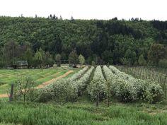 Munții Codru Moma – Ruben Budau Moma, Vineyard, Outdoor, Park, Farm Gate, Outdoors, Vine Yard, Vineyard Vines, Outdoor Games