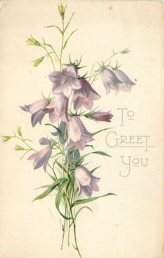 """To Greet You"" harebells by Catherine Klein ~ 1907."