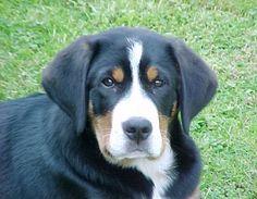 Het is een super schattige hond.