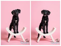 Planning an upcoming puppy portrait session? Here's some inspiration for you in this gallery by Chewbone Studios featuring our Coral and Suede Gray paper backdrops!