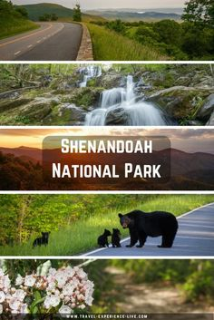 A Guide to Shenandoah National Park, Virginia.  Includes the best Skyline Drive overlooks, hiking trails, waterfalls and sunset spots.