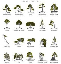 bonsai tree styles