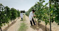 2,5 milioni di Euro nei settori strategici dell'agroalimentare italiano: olivicoltura e acquacoltura #Ricerca #UniTo