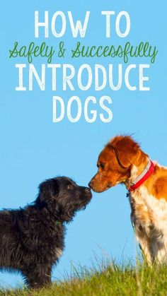 You've decided to add another four-legged friend to your family, yay! But how does your current dog feel about a new pup in the house? If you're worried about a clash of the canines, we've got a few tricks to help safely and successfully introduce dogs to each other. A harness and leash can help keep any aggressive reactions under control, and shared toys can help your little buddies bond. Visit eBay for more tips on helping your dogs become best friends fur-ever.