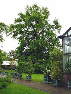 Hortus Leiden (photo Cor Kwant)