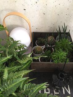 Greens at home | 'Vitamine plant'  launch at Hutspot Amsterdam