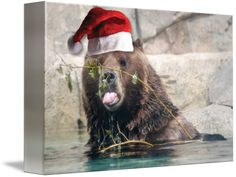 """""""Christmas+Brown+Bear""""+by+Roseann+Riggi-Knudson,+Bartlett+//+cute+brown+bear+wearing+a+Santa+Hat+//+Imagekind.com+--+Buy+stunning+fine+art+prints,+framed+prints+and+canvas+prints+directly+from+independent+working+artists+and+photographers."""