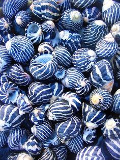 "Look at how unique these blue and white shells are! Do I pin to ""Sea Life,"" ""Pretty Pictures,"" or ""Fifty Shades of. Patterns In Nature, Textures Patterns, Nature Pattern, Beautiful Patterns, Blue Aesthetic, Something Blue, My Favorite Color, Shades Of Blue, Fifty Shades"