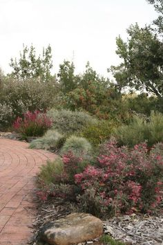 australian landscapes by ian johnson Australian gardens – landscape & plants GardenDrum Bush Garden, Dry Garden, Garden Shrubs, Landscaping Plants, Front Yard Landscaping, Landscaping Ideas, Landscaping Software, Water Garden, Garden Hose