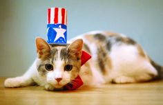 6 Tips for Keeping Your Cat Safe on the Fourth of July