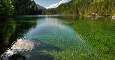 Green lake with ripples across the surface, surrounded by pine forest. Tree Wallpaper, Nature Wallpaper, Iphone Wallpaper, Austria, Lake Mountain, Lake Water, Lake Forest, Nature Tree, Summer Pictures