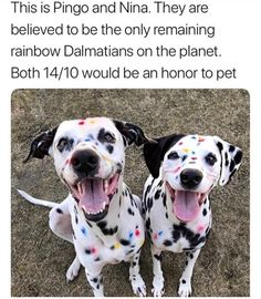 The rarest puppies of all - Humour Cute Little Animals, Cute Funny Animals, Funny Cute, Funny Animal Memes, Funny Animal Pictures, Funny Dogs, Funny Kitties, Funny Horses, Cute Puppies