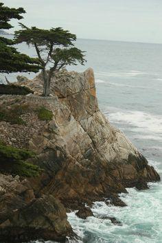 Road trip California - 17 Mile Road - Lone Cypress