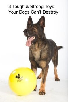 Three Of Toughest & Strongest Toys Your Dog Won't Be Able To Destroy  ... see more at PetsLady.com ... The FUN site for Animal Lovers