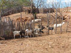 Sheep by Escritor Emanuel Carvalho