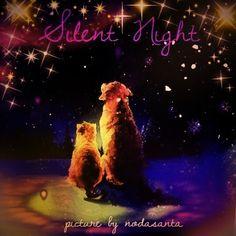 クリスマスの夜に二匹のラブカップルほのぼのしますね!  僕の大好きなクリスマス歌を紹介します。 Jackson 5 Christmas Songs http://youtu.be/FZ1iu3skJeQ  Silent Night picture by nodasanta クリスマスの夜に tsū SNS http://youtu.be/k2OFnvz_D5U
