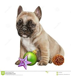Lovely New Year`s Puppy And Fur-tree Dyeing Stock Image - Image: 104476281