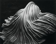 Edward Weston – was one of the most innovative and influential American photographers. He was also a great still life photographer. Edward Weston, Eggplant on Plate via Edward Weston, A… Underwater Photography, Abstract Photography, Animal Photography, Fine Art Photography, Street Photography, Landscape Photography, Portrait Photography, Nature Photography, Photography Magazine