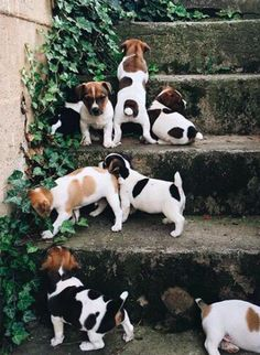cute puppy dog army | #dogs pets animals