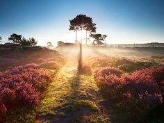 Nationaal Park Hoge Veluwe #veluwe #nature