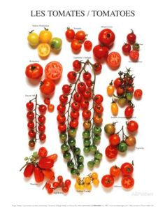 The 10 Most Common Home Garden Tomato Plant Problems And How To Prevent Or Correct Them. Tomato Garden, Tomato Plants, Vegetable Garden, Garden Tomatoes, Baby Tomatoes, Cherry Tomatoes, Garden Plants, Fruit And Veg, Fruits And Veggies