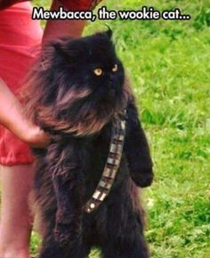 First time to see a wookie cat