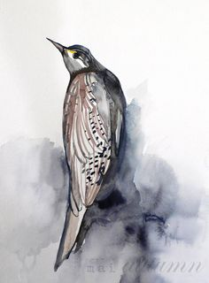 Meadowlark - Fine art print available in several sizes from Mai Autumn
