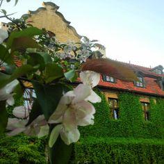#Oliwa #Park in #Gdansk   #building #flowers