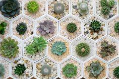 Coleccionas plantas para tu casa, sobre todo suculentas de todo tipo. | 23 Señales inequívocas de que eres un neohipster