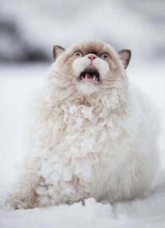Nieve!!!