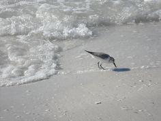 Marco Island, Florida. Memories.