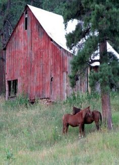 Old Red Barn and Horses