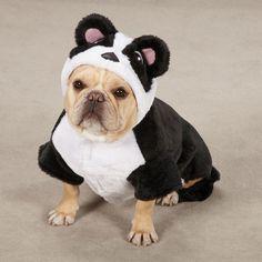 French Bulldog in a Panda Costume.