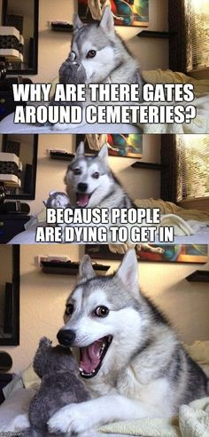 Bad Pun Dog | WHY ARE THERE GATES AROUND CEMETERIES? BECAUSE PEOPLE ARE DYING TO GET IN | image tagged in memes,bad pun dog,funny,cemetery | made w/ Imgflip meme maker
