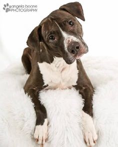 You can fill out an adoption application online on our official website.Sam is a sweet girl who has had a difficult past and deserves a happy forever home. Sam has been in my home as a foster for several months and she has been a wonderful girl~very...