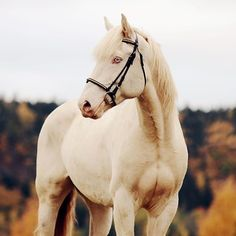 Pinterest ➳ ercequestrian Funny Animals, Cute Animals, Akhal Teke, All About Horses, Connemara, Palomino, Equine Photography, Horse Art, Zebras