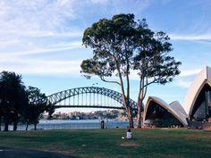 #sydneyharbourbridge #harbour #bridge #sydneyoperahouse #operahouse #building #architecture #sydney #landmarks #royalbotanicgardens #garden #park #sky #clouds #light #vsco #vscocam sitting... waiting... wishing... by paultags http://ift.tt/1NRMbNv