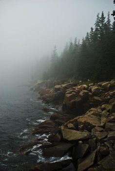 Forest Rocks Fog and Ocean in Acadia National Park Maine - Mark Emmerson