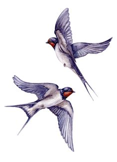Watercolor two flying swallows isolated on white background. Swallow Bird Tattoos, Two Birds Tattoo, Tattoo Bird, Nicolas Vanier, Middle Finger Tattoos, Dessin Old School, Bauch Tattoos, Lace Tattoo Design, Vogel Tattoo
